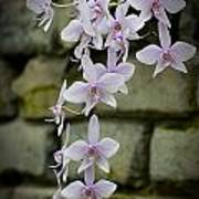 Orchids Pictures 47 Art Print