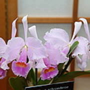 Orchids - Us Botanic Garden - 011315 Art Print by DC Photographer