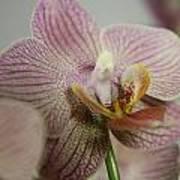 Orchids5 Art Print
