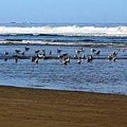 Oregon Coast Seabirds Art Print