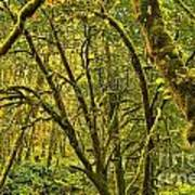 Oregon Rainforest Art Print
