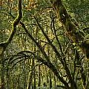 Oregon Rainforest Green Art Print