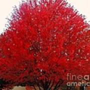 Oregon Red Maple Beauty Art Print