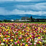 Oregon Tulip Farm - Willamette Valley Art Print