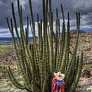 Organ Pipe Cactus The Visitor 1 Art Print