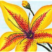 Oriental Daylily Trio Art Print