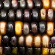 Ornamental Corn Art Print