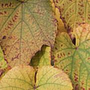 Ornamental Vine Art Print