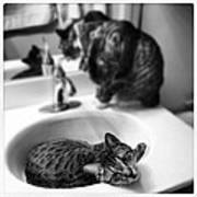 Oskar And Klaus At The Sink Art Print by Mick Szydlowski
