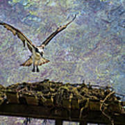 Osprey-coming Home Art Print