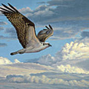 Osprey In The Clouds Art Print