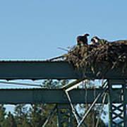 Osprey Nest With Mom And Chicks Art Print