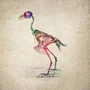 Osteology Of Birds Art Print by Aged Pixel