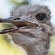 Ostrich Bokeh V2 Art Print