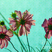 Otherworldly Cosmos Flowers In Pink And Green Art Print
