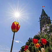 Ottawa Tulip Festival Art Print