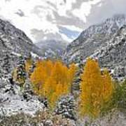 Ouray Fall Colors Art Print