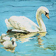 Out For A Morning Swim Art Print