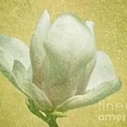 Outer Magnolia Art Print