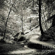 Over The River And Through The Woods Art Print