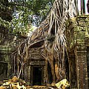 Overgrown Jungle Temple Tree  Art Print