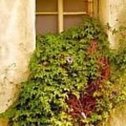 Overgrown Window Of Old Building Art Print