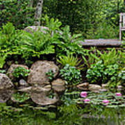 Overlooking The Lily Pond Art Print