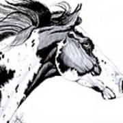 Overo Paint Horse Art Print