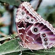 Owl Butterfly Art Print