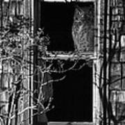 Owl In The Window Art Print