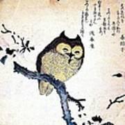 Owl On Tree Branch Art Print