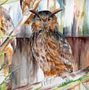 Owl Series - Owl 2 Art Print
