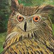 Owl With Orange Eyes Art Print