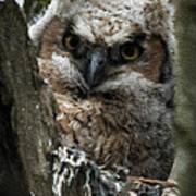 Owlet On The Watch Art Print
