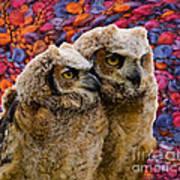 Owlets In Color Art Print