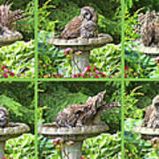 Owls Do Take Baths Art Print