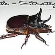 Ox Beetle Art Print