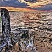 Oyster Bay Stump Sunset Art Print