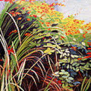 Pacific Crocosmia Art Print