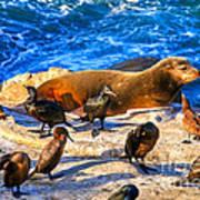 Pacific Harbor Seal Art Print by Jim Carrell