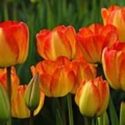 Pacific Northwest Tulips 1 Art Print