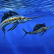 Pacific Sailfish Art Print