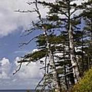 Pacific West Coast Trees Art Print