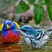 Painted Bunting & Cerulean Warbler Art Print