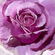 Painted Purple Rose  Art Print
