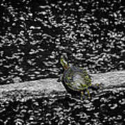 Painted Turtle In A Monochrome World Art Print