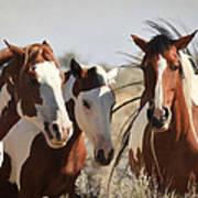 Painted Wild Horses Art Print