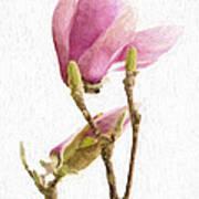 Painterly Pink Magnolia Art Print