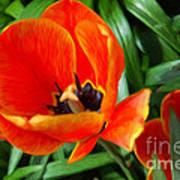 Painterly Red Tulips Art Print