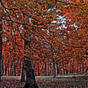 Painterly Style Autumn Trees Art Print